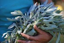 Health, Herbs, & Foraging
