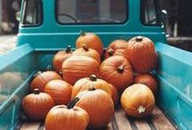 Autumn  / by Elkie Brown