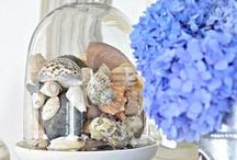 Seashell Decor / Hand picked seashells tell a story. These seashell decor ideas show how to display your found treasures in style. / by Completely Coastal