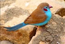 Beautiful Birds / Birds / by JoAnne Rowan
