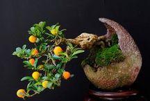 Ikebana and bonsai