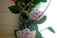 House plants / Kamerplanten