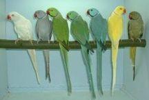 Parrots / What I adore :)