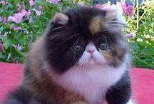 kittens / cte