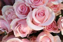 Allerlei soorten rozen / Heel veel kleuren