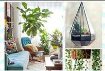 Design and Style / Trending décor and designs that transform homes into personality statements.