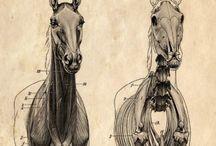 horses / soul mate