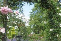 Trädgårdenutanförbalkongräcket / Växter, blommor, pyssel, svett, tårar, glädje och annat som gör en trädgård