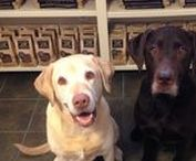 Ducky & Leroy / Two handsome rescued Labrador Retrievers... Adopt don't Shop!