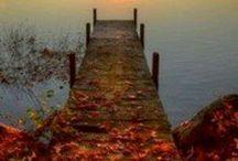 Fall / by Ashley Guay