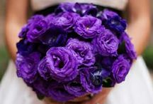 Purple Wedding / Definitely going have a purple wedding theme