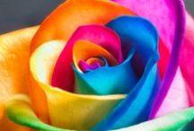 Svet farieb / Farby sú všade okolo nás. Objavuj ich s perami Pilot! :)
