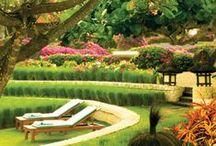 leisure in the garden / Każdy z nas marzy czasami o chwili wytchnienia w pięknym ogrodzie, bujając się na hamaku lub czytając książkę na drewnianej huśtawce... :) /// Everyone dreams sometimes about relaxation in a beautiful garden, swinging in a hammock or reading a book on a big wooden swing... :)