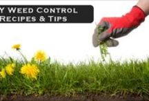 Plants & Garden:- Info
