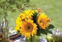 Sunflowers Novelty - Unique Varieties / Sunflowers aren't just yellow!