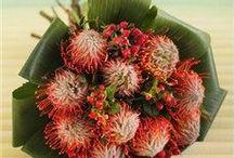Protea - Cut flowers / Design Ideas and appreciation for Protea!
