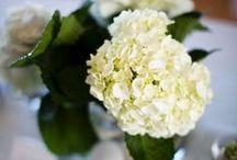 Flowers, Bouquets, & Centerpieces