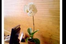 daun exotica / rental tanaman