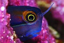 Buscando a Nemo...