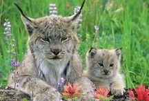 Spectacular Animals