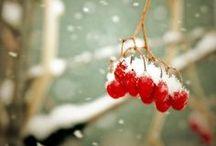 Favourite season - WINTER