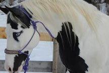 Cavalli, Unicorni e Pegaso