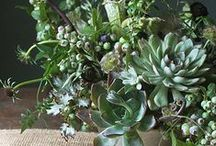 Succulents (Cut) / We are crazy about Succulents!