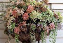 hangingbaskets / flowers