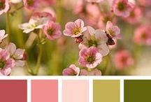 Palette Colori / Palette Colori