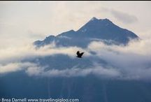 Alaska - My Home / I grew up in Alaska, a place I will always call home.