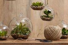 Plant life: Succulents & terrariums