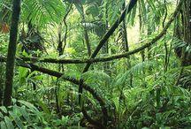 Jungle / rainforest