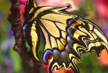Flutterbys and other insects