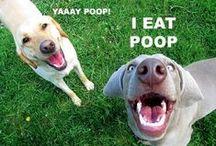 I Love Dogs / Lovable, hugable hounds.