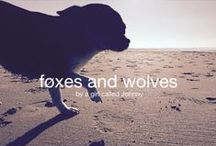 Foxes ans Wolves