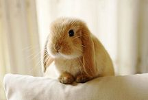 Bunnies n their stuff