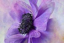 Flowers / Bloemen tekeningen
