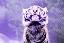 AMAZING ANIMALS / animals love fur tiger lion panther wolf baby bear polar fox bambi little tiger swan paw lynx crocodile bird dolphin fish bee deer black tiger black lion goose snake butterfly jellyfish cats kittens owl feather bengal beetle wings whale fish panda octopus blue white orange brown black pink color blue beige cheetah pelt skin
