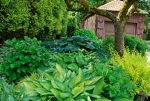 YARD & GARDEN TIPS / Tips on yards, potted plants, gardening, outdoor furnishings, green houses, etc. / by Kaleoaloha