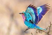 Pássaros / livres pra voar!