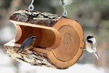 Bird feeders and houses