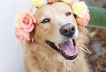 Weddings & Pets