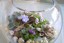 Blommor,flowers / Vackra arrangemang