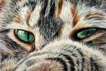 Katter,cats / Katter