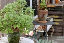 Outdoor / Przestrzeń do odpoczynku, wspólnych spotkań z bliskimi, siedzenia na kocu w słoneczne dni....