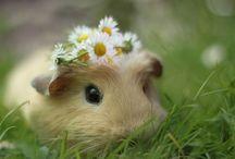 Adorableness / Cuteness much!