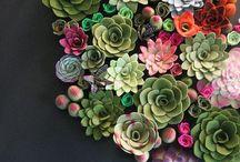 Plants, Herbs & Garden