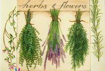 fűszernövények / #fűszernövények gyűjteménye