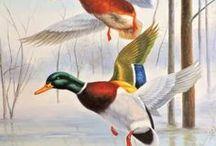 madarak, szárnyasok / #madarak és egyéb #szárnyasok