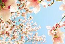 Spring / voorjaar... / Classroom ideas for springtime!